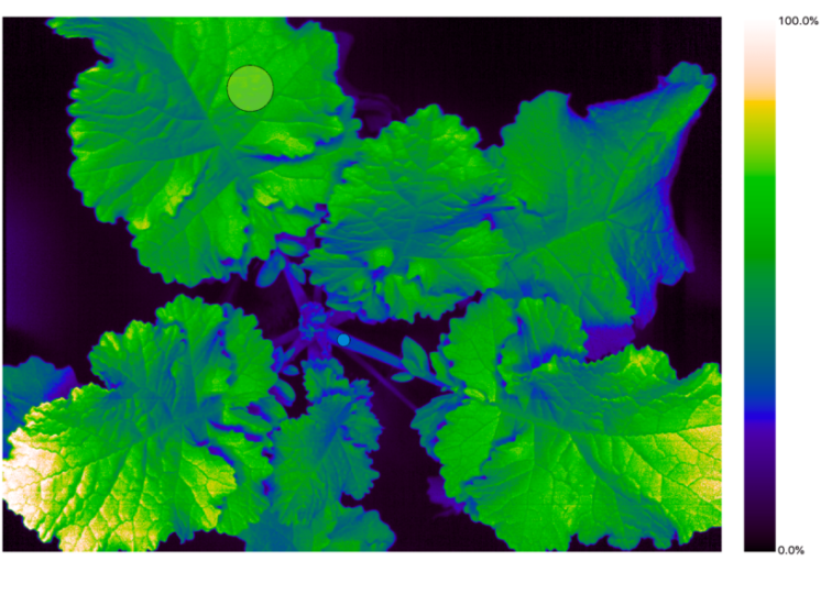 Hyperspectral_Software_Plant